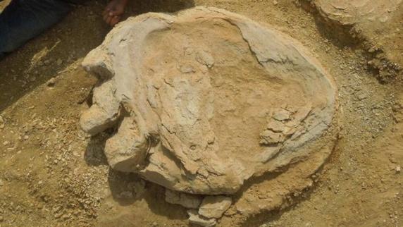 کشف بزرگترین رد پای یک دایناسوردر استرالیا