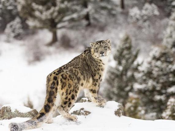 ششمین انقراض بزرگ ِ جانداران نزدیک است