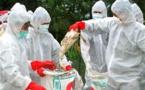 نابودی هزاران قطعه مرغ در تایوان بر اثر آنفولانزای مرغی