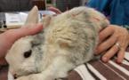 درمان حیوانات با طب سوزنی
