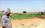 900 میلیارد تومان خسارت اولیه کشاورزان اهوازی از ریزگردها