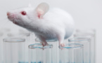 درمان دیستروفی عضلانی در موش با ویرایش ژنتیکی