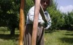 عکس؛ مار غول پیکر در باغهای اشنویه