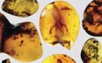 هیجان دانشمندان با دیدن آفتابپرست ۹۹ میلیون ساله