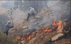 بخشی از جنگلهای استان فارس و کهکیلویه و بویراحمد در آتش سوخت