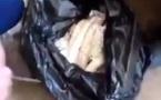 ویدیو- شگرد تازه سپاه قدس، گوسفند بی زبان وسیله جدید قاچاق مواد مخدر به اردن