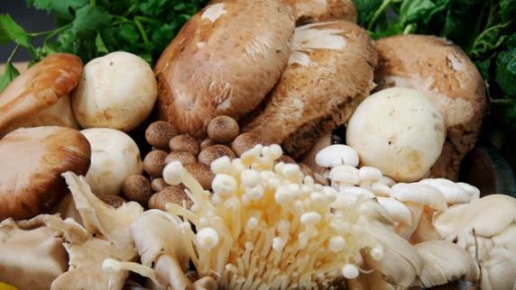 مضرات و فواید مصرف قارچ