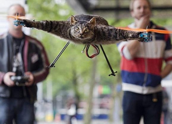 یک مبتکر هولندی گربه مرده خود را به پرواز در آورد