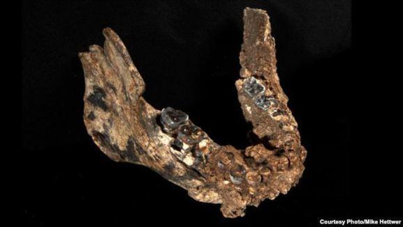 کشف سومین گونه انسان نخستین در آفریقا
