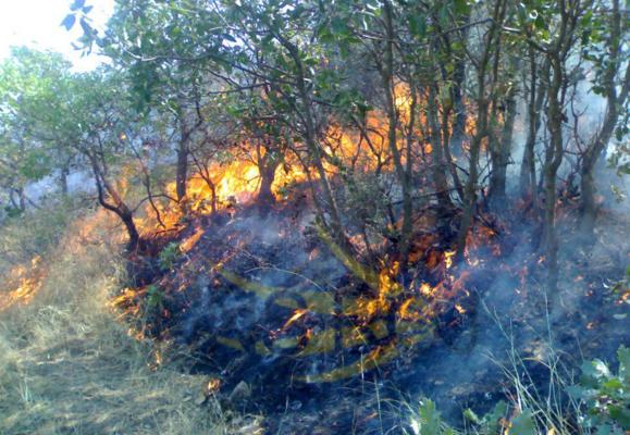 مراتع و جنگلهای نزدیک مریوان یک هفته است که در آتش میسوزد