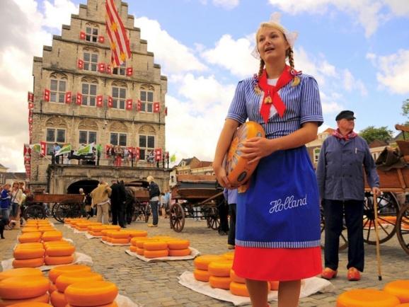 عرضه پنیر در هلند -عکس آرشیوی