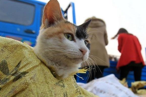 نجات ۱۰۰۰ گربه در راه آشپزخانه ای در چین