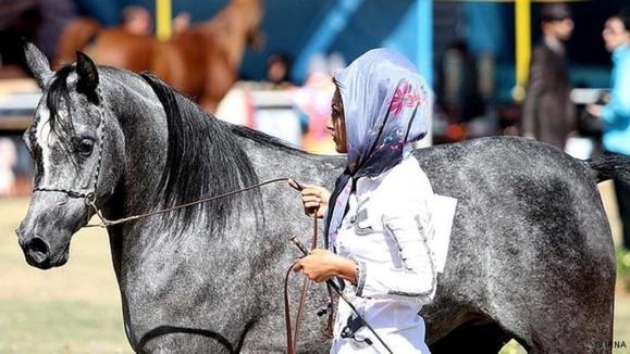اسب اصیل عرب از اهواز
