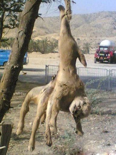 نيروگاه اتمی بوشهر و ظهور حیوانات عجیب الخلقه+عکس