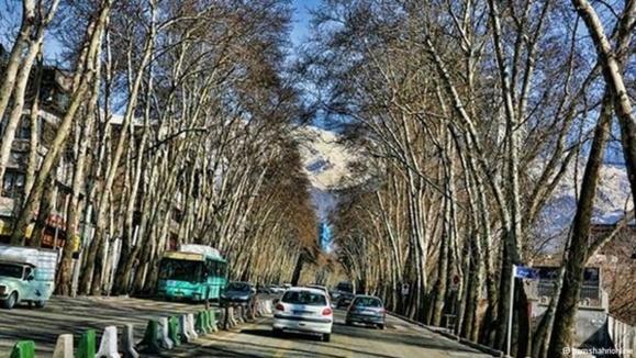 مرگ شبانه چنارهای طولانیترین خیابان خاورمیانه/نیوشا صارمی