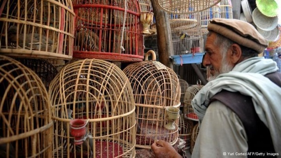 به جنگ انداختن حیوانات، سرگرمی محبوب در افغانستان