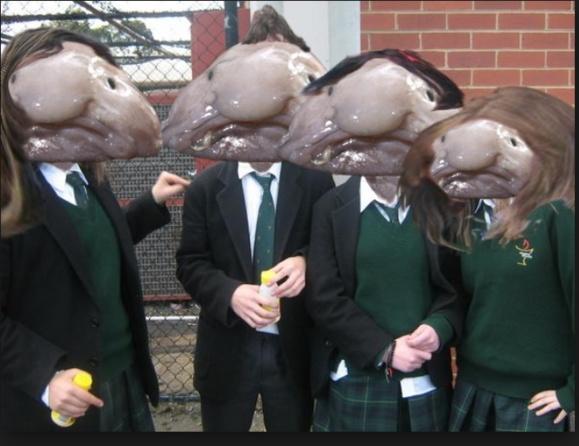 در یک نظر سنجی در شهر نیوکاسل  بریتانیا ماهی ژلاتینی بلوبفس بعنوان زشت ترین ماهی دنیا شناخته شد