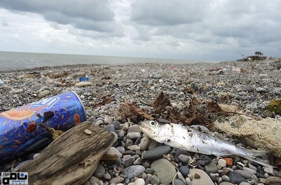 ورود ۱۰۰درصد فاضلاب  خانههای ساحلی به دریای خزر