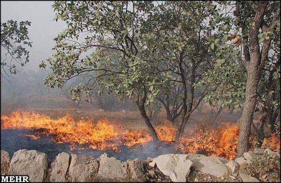 دهها هکتار از جنگلهای کهگیلویه بویراحمد در آتش سوخت