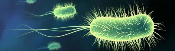 مصرف آنتیبیوتیک؛ عامل بروز چاقی
