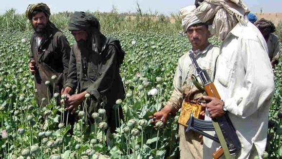 سود طالبان از کاشت خشخاش و شاهدانه در افغانستان