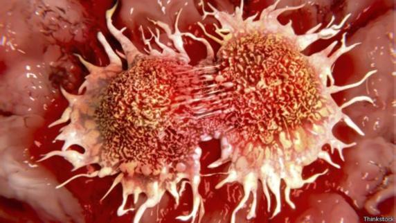 تبدیل بافت سرطانی به بافت سالم در آزمایشگاه