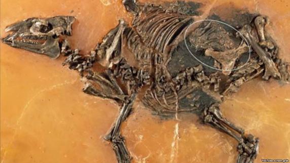 کشف اسب باردار ۴۸ میلیون ساله