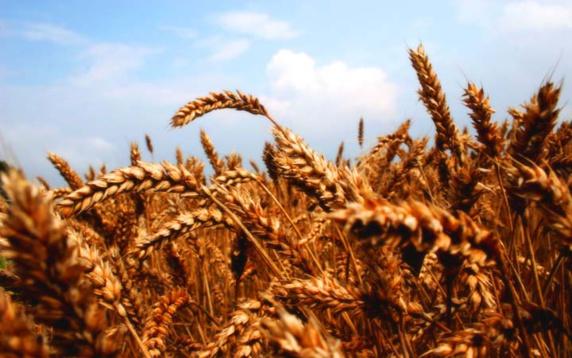 امنیت و ایمنی غذایی در ایران از منظر اقتصادی