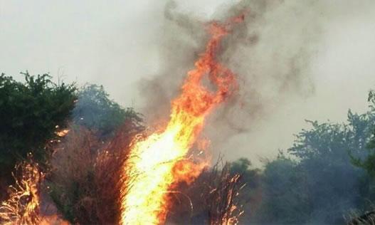 هزاران درخت در منطقه حفاظتشده مشداخ در آتش سوخت
