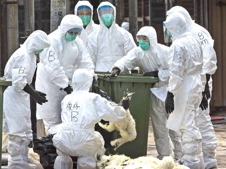 نابودی بیش از یک میلیون پرنده بر اثر آنفولانزای مرغی در فرانسه