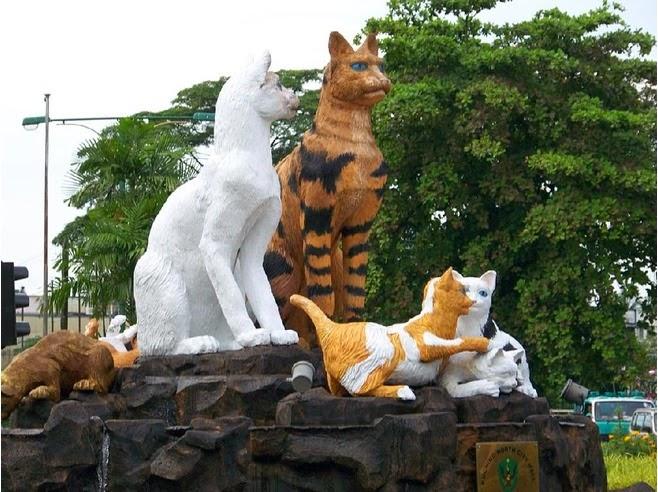 کوچینگ شهری در کشور مالزی برای عاشقان گربه