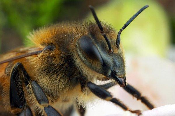 سونامی مرگ زنبورهای عسل ایران با داروهای قاچاق/ همیشه پای یک «چین» در میان است