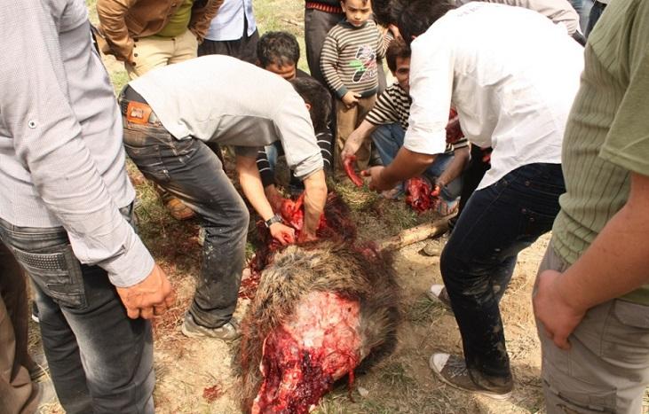 ماجرای سوپرمارکتی که گوشت خوک در تهران عرضه میکرد