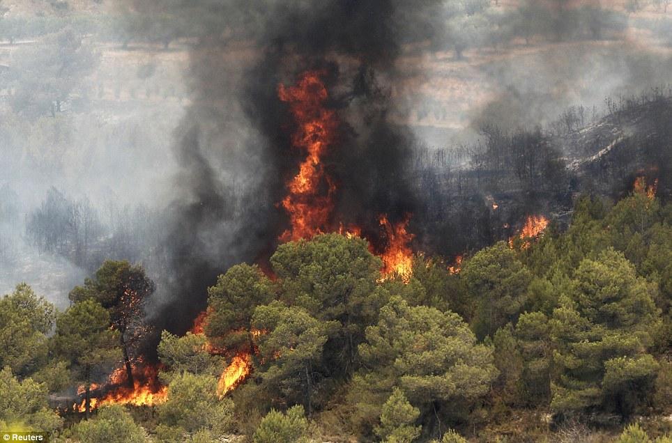 در آستانه «روز جنگل»: تخریب ۱۴۳ هزار هکتار از جنگلهای شمال ایران ظرف ۵۰ سال
