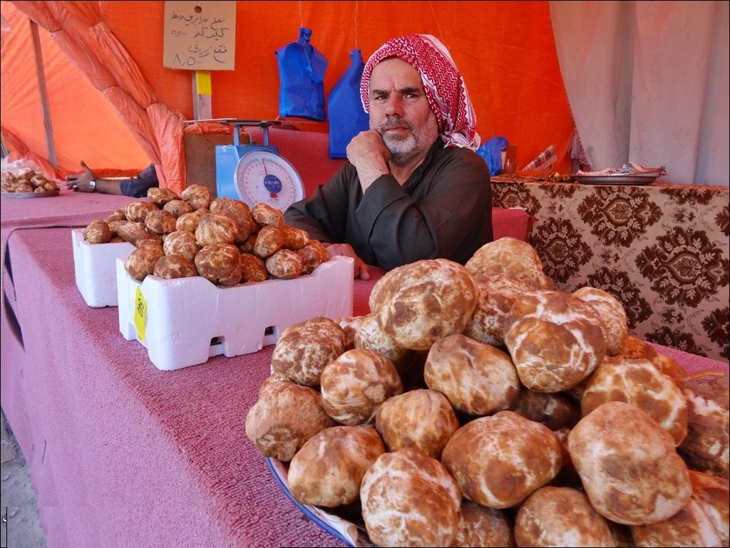 خواص گران قیمت قارچ خوراکی معروف به دنبلان کوهی!