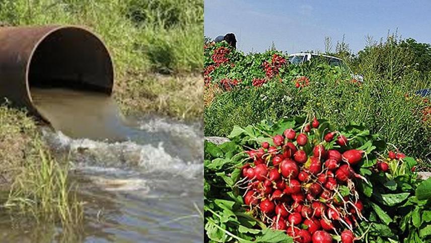 داستان آبیاری مزارع با آب فاضلاب در ایران همچنان ادامه دارد