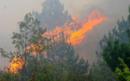 چهل هکتار از جنگلهای احواز در آتش سوخت