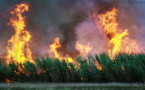 فیلم/خاکستر مزارع نیشکر هنوز بر سر مردم احواز میریزد