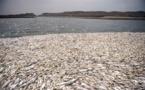 تلف شدن هزاران قطعه ماهی در گلستان
