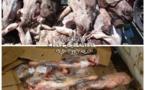 کشف 2000هزار کیلوگرم #گوشت خر و سگ ازشرکت سوسیس وکالباس سازی توس #مشهد جهت آگاهی