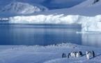 به گفته دانشمندان روس نمونه برداری بیشتر از آبهای قطب جنوب می تواند کشف یک باکتری جدید را ثابت کند