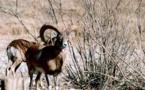 جان دادن گونه های کم ياب حيات وحش در باتلاق بیآبی هرمزگان