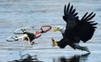 عقابها به شکار پهپادها میروند