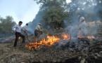۳۰ هکتار از جنگلهای لرستان در آتش سوخت